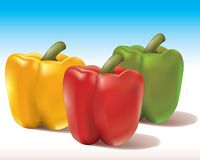 Bell peppers. Realistic illustration of bell peppers Stock Photo