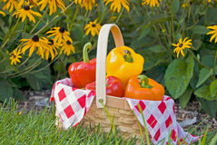 Bell peppers in basket with black-eyed susan Stock Image