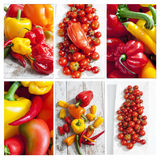 Bell peppers, chilis, habaneros and tomatoes,collage Stock Image