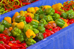 Bell peppers. Fresh Green Pepper at supermarket Royalty Free Stock Image