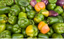 Bell Peppers At The Market. Variety of sweet bell peppers on display at an outdoor market Royalty Free Stock Photo