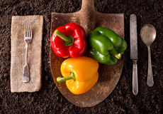 Bell Peppers. Organic farm to table healthy eating concept on soil background Stock Photo