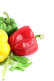 A Bell peppers Three colors. Stock Photos