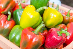 Bell sweet pepper paprika Royalty Free Stock Images