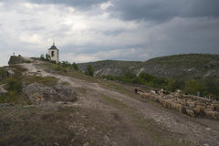 The bell tower of the cave monastery and a herd of the sheep. Royalty Free Stock Photo