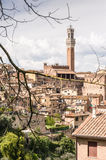 Bell Tower framed by tree branches. A bell tower of an ancient Tuscan town, framed by tree branches Stock Photos