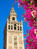 Bell tower Giralda, Seville, Spain Stock Images