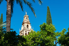 Bell tower of the Great Mosque Cathedral in Cordoba, Spain. View of the bell tower and former minaret of the Mosque-Cathedral of Córdoba against a clear blue Stock Photos