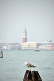 Bell tower of the Saint Giorgio Maggiore Church Royalty Free Stock Image