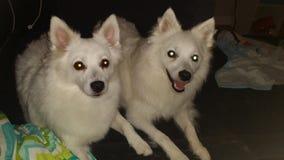 Bella και Olaf Στοκ εικόνες με δικαίωμα ελεύθερης χρήσης