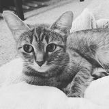 Bella кот Стоковые Фото