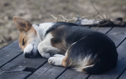 Bella addormentata Immagine Stock Libera da Diritti