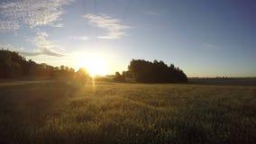 Bella alba di estate sul campo dell'azienda agricola con la nebbia della foschia di mattina Timelapse 4K archivi video