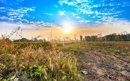 Bella alba di mattina al paesaggio del campo di agricoltura Fotografia Stock Libera da Diritti