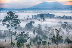 Bella alba e nuvole nebbiose in foresta a Thung Salaeng immagini stock