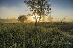 Bella alba nebbiosa Fotografia Stock
