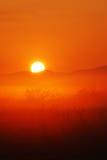 Bella alba nel campo, Tailandia Fotografia Stock Libera da Diritti