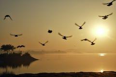 Bella alba nel lago Chandigarh Sukhna Fotografia Stock Libera da Diritti