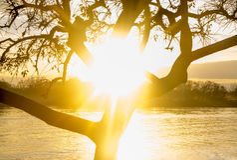 Bella alba nella costa del fiume di Lujan in San Fernando, Buenos Aires Fotografie Stock Libere da Diritti