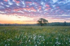 Bella alba nella valle di fioritura, nel paesaggio scenico con i fiori crescenti selvaggi e nel cielo nuvoloso di colore fotografia stock