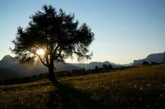Bella alba sull'alpe con il sole dietro un albero Fotografie Stock