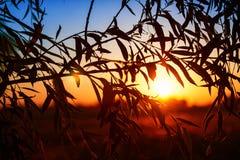 Bella alba vista attraverso i leafes di un albero Immagine Stock
