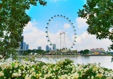 Bella aletta di filatoio di Singapore Fotografie Stock