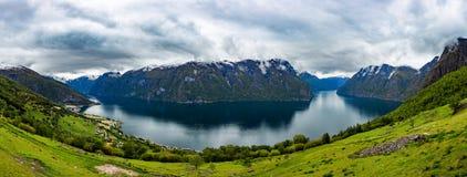 Bella allerta della Norvegia Stegastein della natura Fotografia Stock