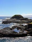 Bella allerta su Phillip Island Fotografia Stock Libera da Diritti