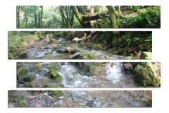 Bella alta qualità di Art With Creek In Jungle della natura Immagine Stock Libera da Diritti