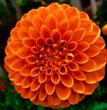 Bella arancia fotografia stock libera da diritti