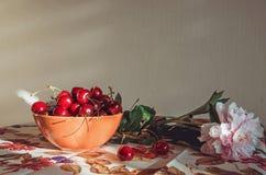 Bella arte, aún composición con una flor rosada fresca de la peonía, cerezas rojas de la vida del marsala en mantel del vintage d Fotografía de archivo libre de regalías