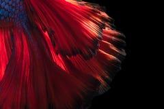Bella arte abstracta de la cola móvil de los pescados de los pescados de Betta Fotos de archivo
