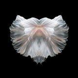 Bella arte abstracta de la cola móvil de los pescados de los pescados de Betta Fotos de archivo libres de regalías
