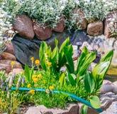 Bella assegnazione domestica del giardino in primavera Immagine Stock