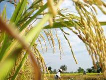 Bella azienda agricola Fotografie Stock