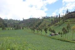 Bella azienda agricola, nel tengger Semeru Bromo Fotografia Stock