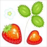 Bella bacca rossa matura Fragola saporita e dolce succosa, una fonte di vitamine utili e oligoelementi Illustrazione di vettore royalty illustrazione gratis