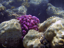 Bella barriera corallina. immagini stock