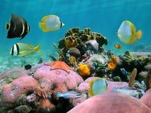 Bella barriera corallina Fotografia Stock Libera da Diritti
