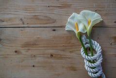 Bella calla bianca sopra la corda Immagini Stock