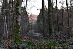 Bella campagna degli alberi immagine stock