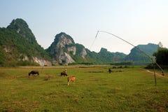 Bella campagna di Quang Binh, Vietnam Fotografie Stock Libere da Diritti