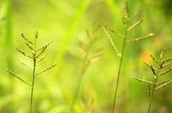Bella carta da parati dell'erba Fotografia Stock Libera da Diritti