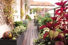 Bella casa moderna con molti fiori immagine stock libera da diritti