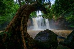 Bella cascata È con un grandi albero e verde e beaut Immagine Stock Libera da Diritti