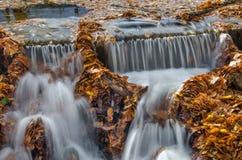 Bella cascata di autunno Immagini Stock