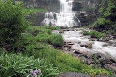 Bella cascata fertile Immagini Stock