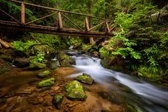 Bella cascata nella foresta Fotografia Stock Libera da Diritti