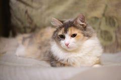 Bella Cat On lo strato Fotografia Stock